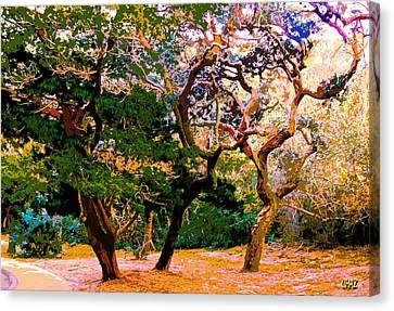 The Beautiful Trees Of Florida Canvas Print