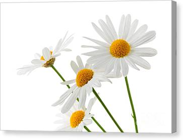 The Beautiful White Flower Canvas Print by Boon Mee