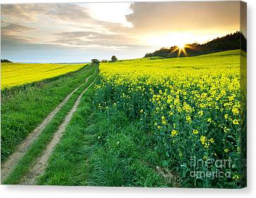 The Beautiful Yellow Rapeseed Field Canvas Print by Boon Mee