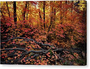 The Beauty Of Autumn  Canvas Print by Saija  Lehtonen