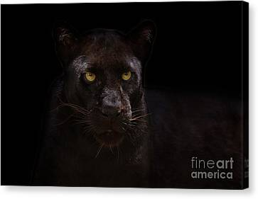 The Beauty Of Black Canvas Print by Ashley Vincent