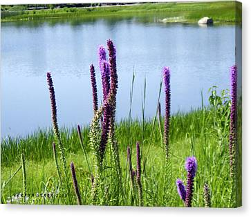 Canvas Print featuring the photograph The Beauty Of The Liatris by Verana Stark