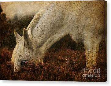 The Bed Of Heather Canvas Print by Angel  Tarantella