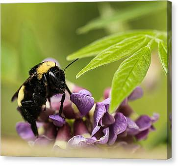 Canvas Print featuring the photograph The Bee's Knees by Cathy Donohoue
