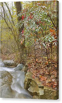 The Berries Of Dogtown Falls - Arkansas - Waterfall Canvas Print by Jason Politte