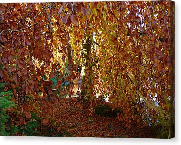 The Best Bench Canvas Print by Connie Handscomb