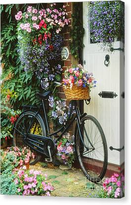 Fuchsia Canvas Print - The Bicycle At Lavender Cottage by MGL Meiklejohn Graphics Licensing