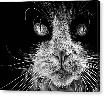 The Big Bad Boy Canvas Print by Brian Carson