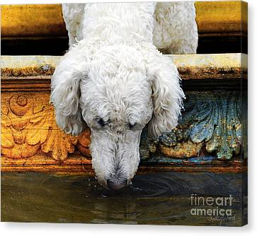 The Big Water Bowl Canvas Print by Judy Wood