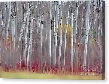 The Birches - Single Canvas Print by Andrea Kollo