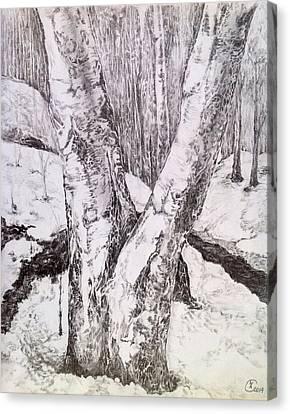 The Birches Canvas Print by Iya Carson