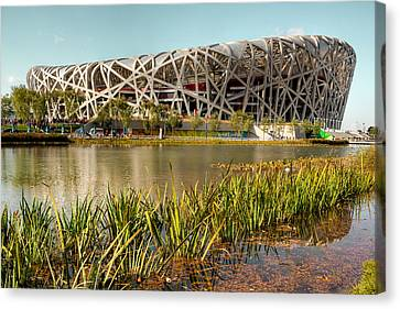 The Bird's Nest Canvas Print by Ray Devlin