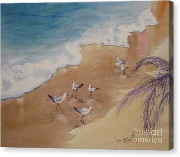 The Birds Of Playa Marinero Canvas Print by Mohamed Hirji