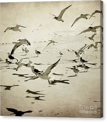 The Birds Canvas Print by Sharon Coty