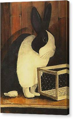 The Black And White Dutch Rabbit  2 Canvas Print