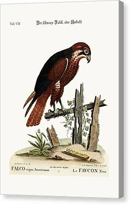 The Black Hawk Or Falcon Canvas Print by Splendid Art Prints