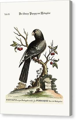 The Black Parrot From Madagascar Canvas Print by Splendid Art Prints