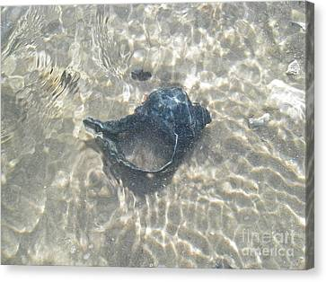The Black Seashell Canvas Print by Mother Nature