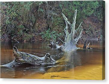 The Black Water River Canvas Print by JC Findley