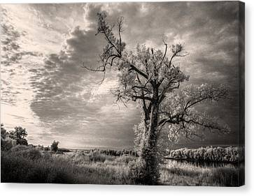 The Blasted Tree Canvas Print