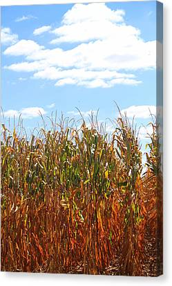 Canvas Print featuring the photograph The Bloody Cornfield by Debra Kaye McKrill