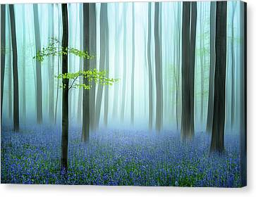 Haze Canvas Print - The Blue Forest ........ by Piet Haaksma