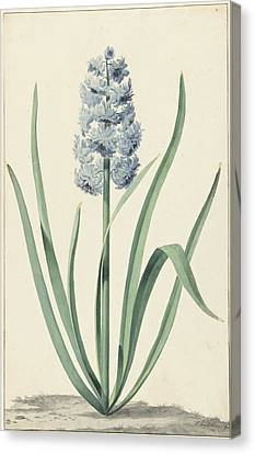 The Blue Hyacinth Franciscus Primus, Jan Augustini Canvas Print by Quint Lox