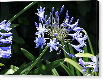 Canvas Print featuring the photograph The Blue by Ivete Basso Photography