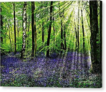 The Bluebell Woods Canvas Print by Morag Bates
