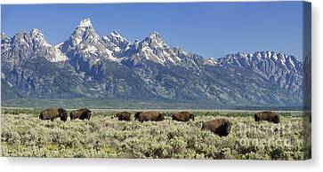The Boys Club Of Grand Teton Canvas Print by Sandra Bronstein
