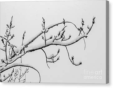 The Branch Of Art Canvas Print
