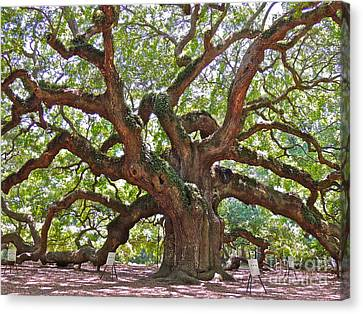 The Branches Of Life Canvas Print by Eve Spring