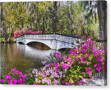 The Bridge At Magnolia Plantation Canvas Print by Kathy Baccari