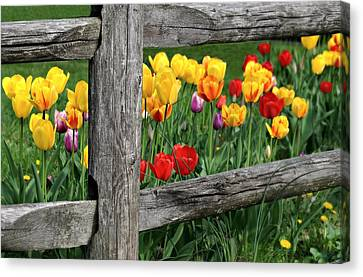 The Brighter Side Canvas Print by Diana Angstadt