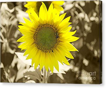 The Brightest In The Bunch Canvas Print by John Debar