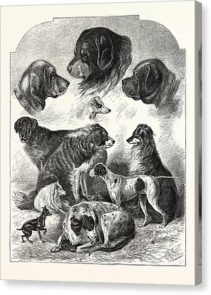 The Brighton Dog Show, Engraving 1876, Uk, Britain Canvas Print by English School