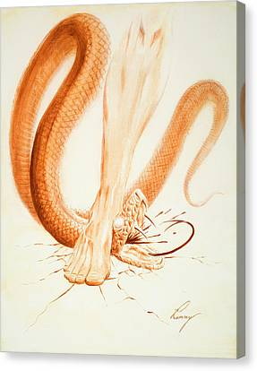 The Bruising Canvas Print by Douglas Ramsey