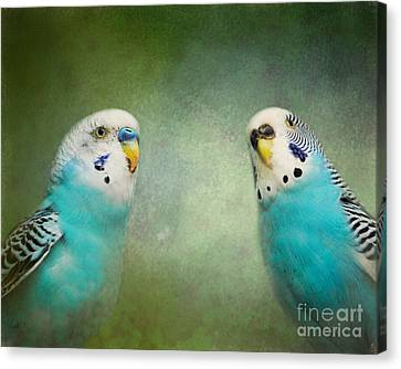 Parakeet Canvas Print - The Budgie Collection - Budgie Pair by Jai Johnson