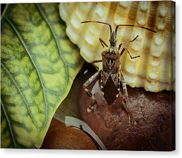 The Bug The Shell And The Leaf Canvas Print
