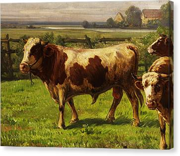 The Bull Canvas Print by Adolf bei Dachau