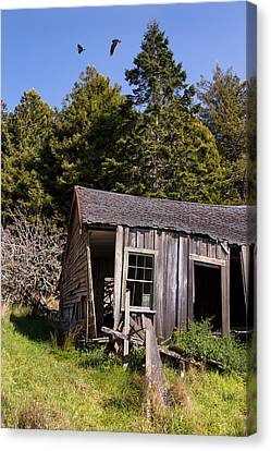 Wild Orchards Canvas Print - The Bunkhouse by Kathleen Bishop