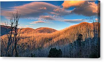 The Burnt Forest Canvas Print by Mark Lucey