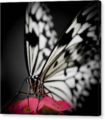 The Butterfly Emerges Canvas Print by Jen Baptist