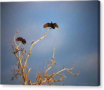 The Buzzard Roost Canvas Print