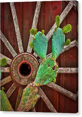 The Cactus And The Wheel Canvas Print by David and Carol Kelly