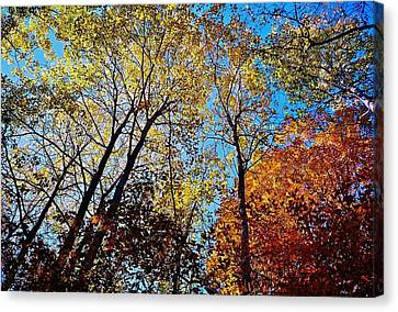 Canvas Print featuring the photograph The Canopy by Daniel Thompson