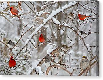 Snow Scene Canvas Print - The Cardinal Rules by Betsy Knapp