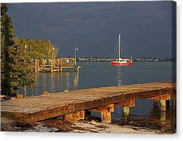 The Casual Observer Canvas Print by HH Photography of Florida