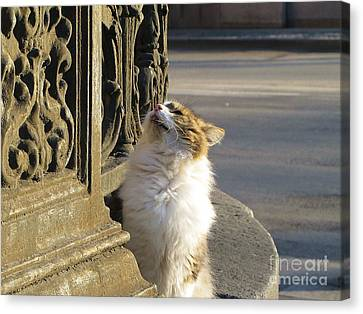 The Cat And Grill Garden Canvas Print by Yury Bashkin