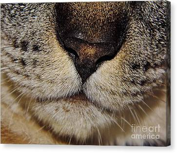 The - Cat - Nose Canvas Print by D Hackett